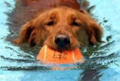 Hobnob pet dog day care kennels swimming training self serve lakewood co 80215 3032338990 solutioingenieria Choice Image