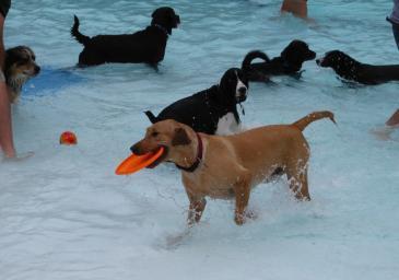 Hobnob pet dog day care kennels swimming training self serve doggy daycare dog daycare solutioingenieria Choice Image