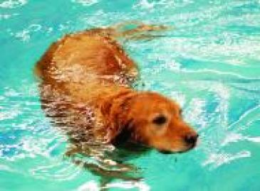 Hobnob Pet Dog Day Care Kennels Swimming Training